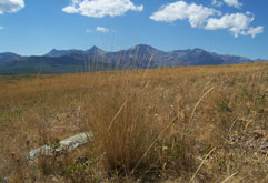 Grasslands Waterton Biosphere