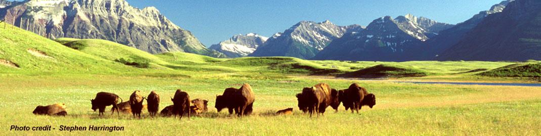 buffalo-header1220
