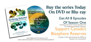 wbr-buy-the-dvd-website-service